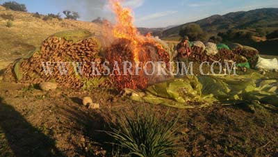 محاربة زراعة القنب الهندي بالقلة : حجز جرارات و إحراق مخدرات