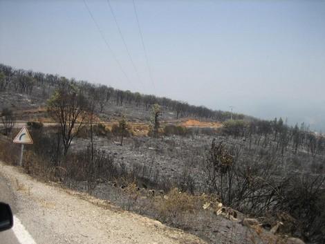 طائرتين و 24 عنصرا للسيطرة على حريق غابوي بمكادي