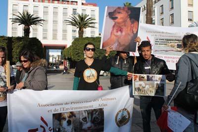 وقفة احتجاجية أمام البرلمان تنديدا بحملة قتل الكلاب الضالة بالقصر الكبير