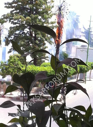 القصر الكبير : حريق بحديقة الموقف يأتي على نخلتين