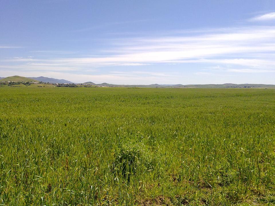 هل أتاكم حديث الزراعة بدون حرث ؟