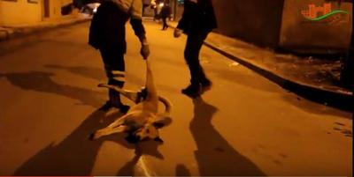 هيئات مدنية تدعوا للاحتجاج أمام البرلمان على قتل الكلاب الضالة بالقصر الكبير